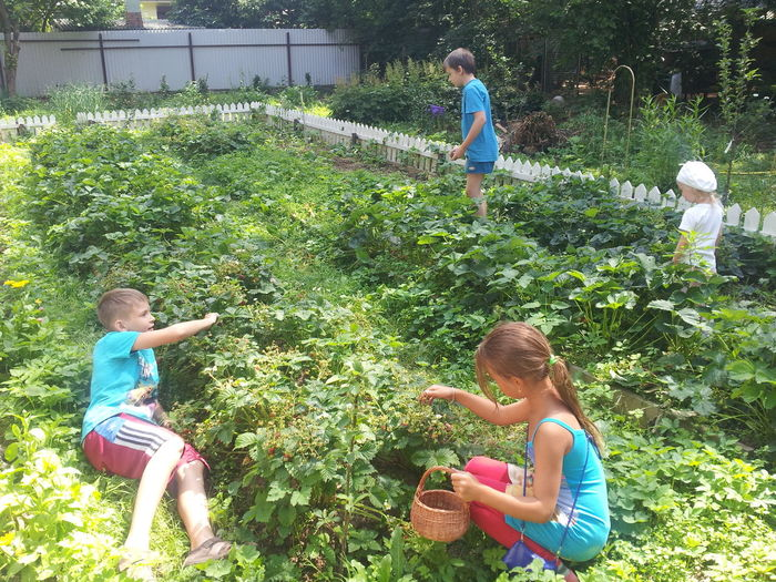 """The invasion of the children on the beds with strawberries. """"Нашествие 2016"""" ... детей на грядки с клубникой. Bed Berries Bliss Childhood Children Children Photography Childrenphoto Garden Garden Bed Garden Photography Happiness Happiness ♡ Happy Happy :) Happy Time Joy Kids Kidsphotography Kindergarten Patch Strawberry Strawberry Season Summer Summer ☀ Young"""