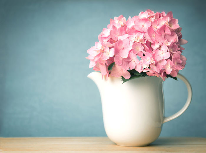 sweet hydrangea flowers in white vase Beauty In Nature Bunch Of Flowers Close-up Cup Flower Flower Arrangement Flower Head Flowering Plant Focus On Foreground Fragility Freshness Indoors  Inflorescence Nature No People Petal Pink Color Pitcher - Jug Plant Still Life Table Vase Vulnerability