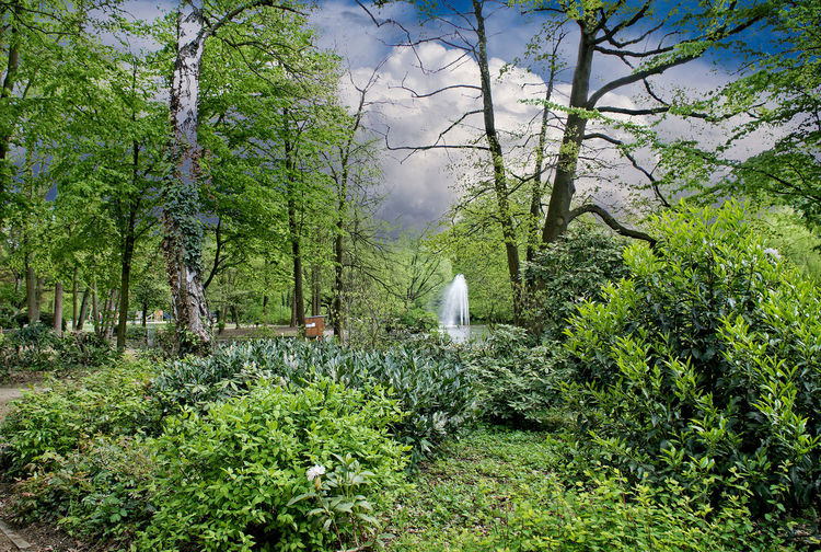 April 17 Beauty In Nature Day Fontaine Forest Green Color Nature No People Outdoors Scenics Sky Tranquil Scene Tree Volksgarten