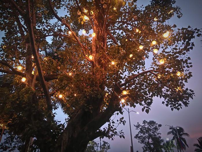 Christmas Lights Tree at Quirino, Roxas Boulevard