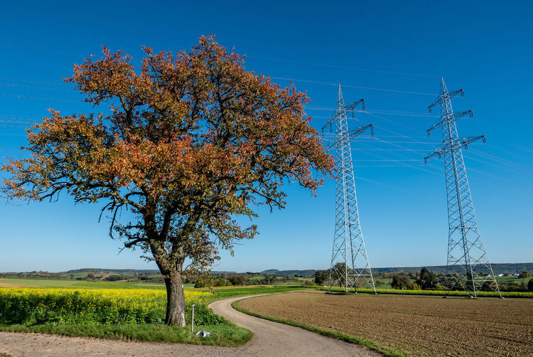 Electricity pylons in autumn Plant Sky Tree Landscape Nature Road Beauty In Nature Land Field Clear Sky Blue Day Electricity Pylon Technology Growth Electricity  Tranquil Scene No People Tranquility Rural Scene Outdoors Change Power Supply