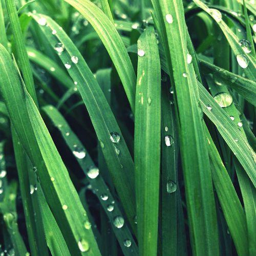 Full frame shot of raindrops on grass