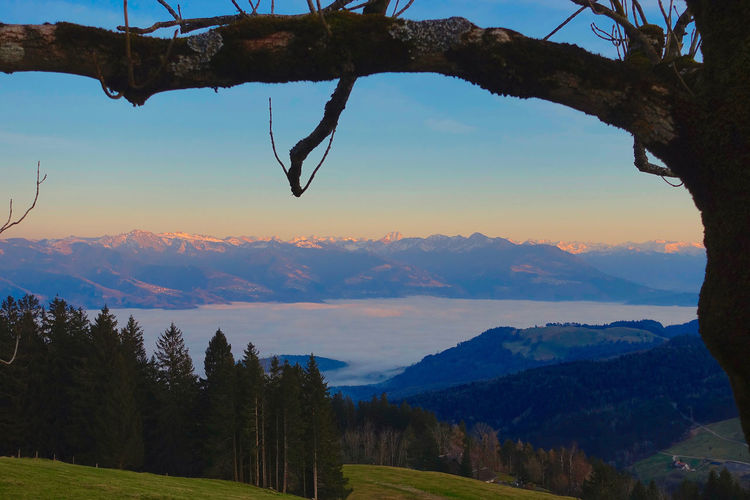 View from Hoher Hirschberg to the with a sea of fog filled Rhine Valley and the Austrian Mountains in the background. Austrian Mountains Beauty In Nature Day Hill Hoher Hirschberg Idyllic Landscape Mountain Mountain Range Nature No People Non-urban Scene Outdoors Remote Rhine Valley Scenics Sea Of Fog Sky Sunset Tranquil Scene Tranquility Tree