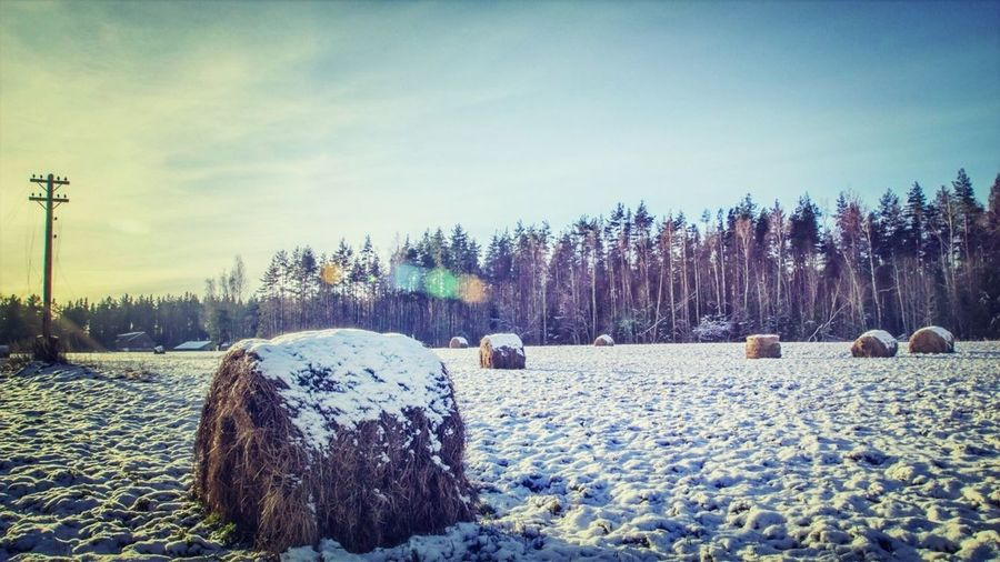 So happy the summer is here but I remember how it was #winter #sun #russia #landscape #nature #naturelovers It's Cold Outside