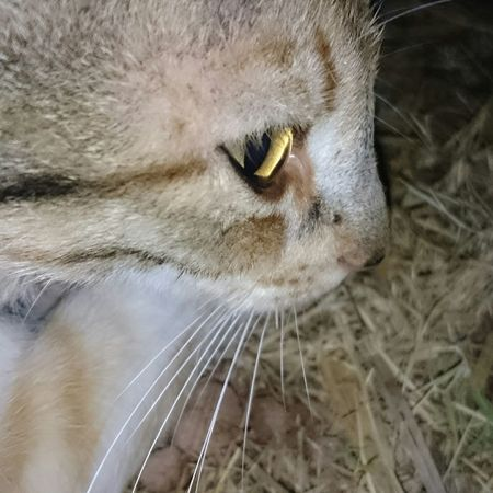 Cat♡ Eyes Cat Lovers Nightphotography EyeEm Best Shots Adrar