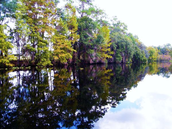 Scenery River River Collection Riverscape Water_collection Florida Life Florida Rainbow River Treescollection Trees Treescape Scenery Shots Scenery_collection