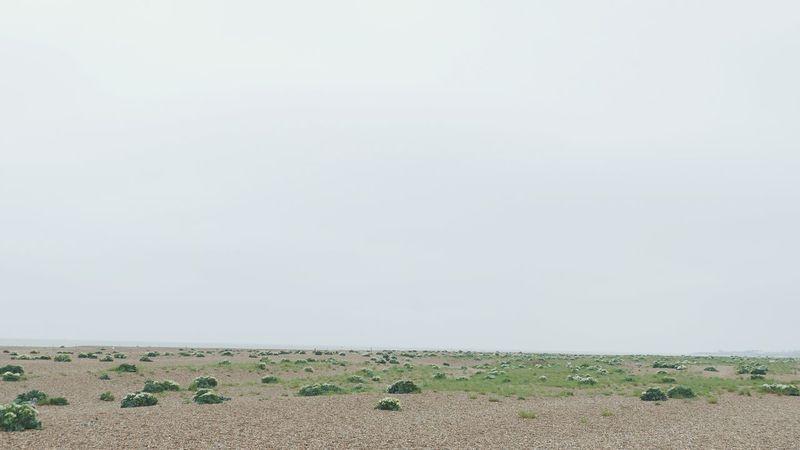' Shingle Street ' Shrubs Beach Explore Endless Alien Planet Shingle Stones Beach Shore Seaside -- B