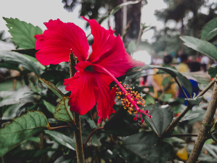 buoyant Flower