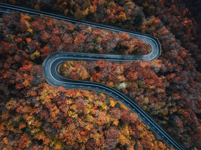 High angle view of road by trees during autumn