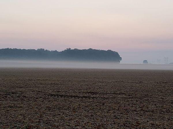 EyeEm Selects Tree Fog Silhouette Agriculture Hill Sun Sky