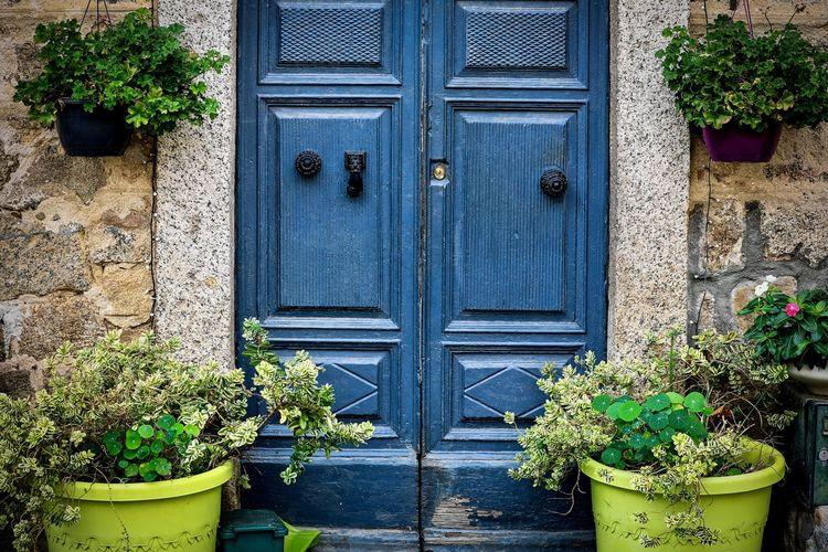 blue door Plant