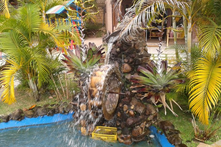 Day Freshness Growth Leaf No People Outdoors Palm Tree Plant Tree Water