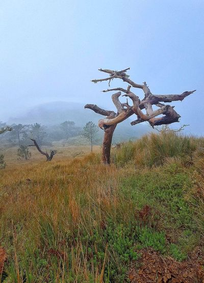 Dead tree at the Akiki trail to Mt Pulag, Luzon. Drop Day Water Sky No People Nature Outdoors Close-up Tree Pixelated Akiki Trail The Philippines Mt Pulag Nature Landscape Eyeem Philippines Travel Destination EyeEm Nature Lover Eyeemphoto