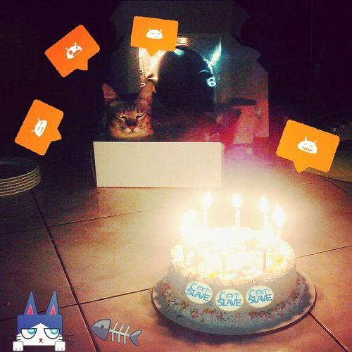 Happiness Cat Birthday Cake Cheese!