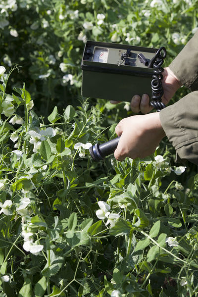 Measuring radiation levels of vegetables. Agriculture Biohazard Contamination Gardening Healthcare Measuring Radioactive Contaminated Nature Danger Detecting Geiger Counter Growth Hand Health Holding Instrument Of Measurement Ionizing Radiation Nature Peas Plant Radiation Radiation Levels Radioactivity Surveying Vegetables