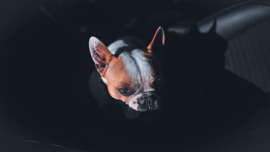 Close-up of dog over black background