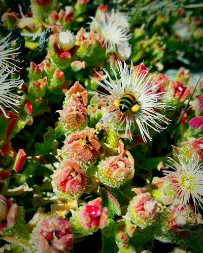 Workerbee Pollenation Naturesbeauty HoneyBee Nectar Hunter