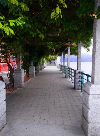 Arona Lago Maggiore Day Holidays Italy Italy❤️ Nature No People Outdoors Tree Chemistart