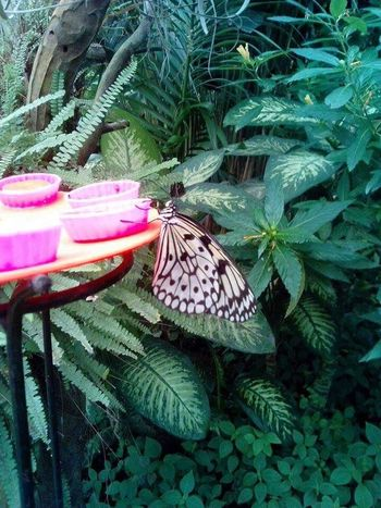 TakeoverContrast Butterfly eating Orange Butterfly Orange Picoftheday Zoophotography Insect Beauty In Nature