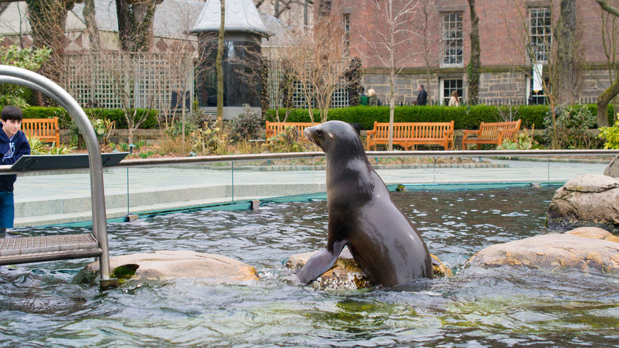 Central Park Central Park - NYC Manhattan New York New York City Pool Time Sea Lion Tourist Attraction  USA USAtrip Zoo Mammal Outdoors Pool Tourism Tourism Destination Tourist Destination Water Zoo Animals