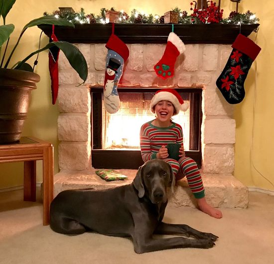 Laughing Child Boy Pajamas Santa Hat Living Room Fireplace Stockings Weimaraner Pet Christmas Holiday Dog Pets Smiling One Person Portrait Looking At Camera One Animal Happiness Indoors  Cheerful Casual Clothing Real People Domestic Animals Full Length