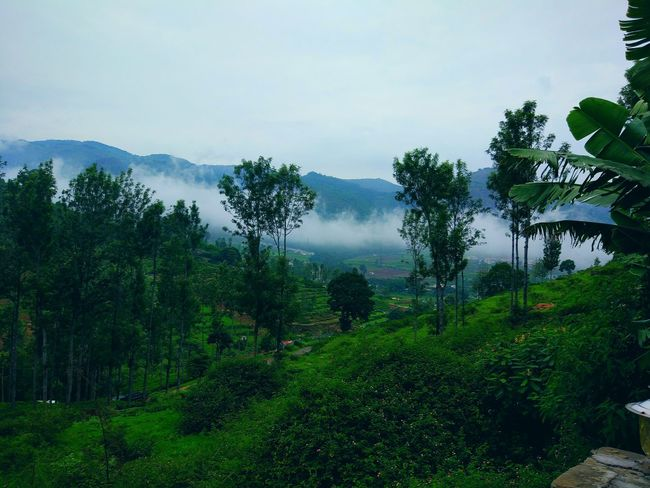 Fog Outdoors Green Color Green Green Green!  Greenery Nature Vacations MIphotography Mi5photography Tranquility Scenics Landscape Cloud - Sky Foggy Morning Freshness Travel Destinations EyeEmReady Tree Mountain Beauty In Nature Freshness