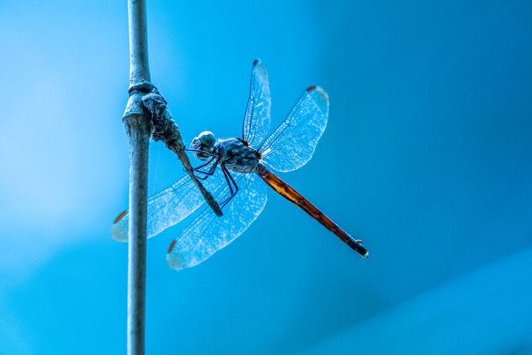 Dragonfly in branch