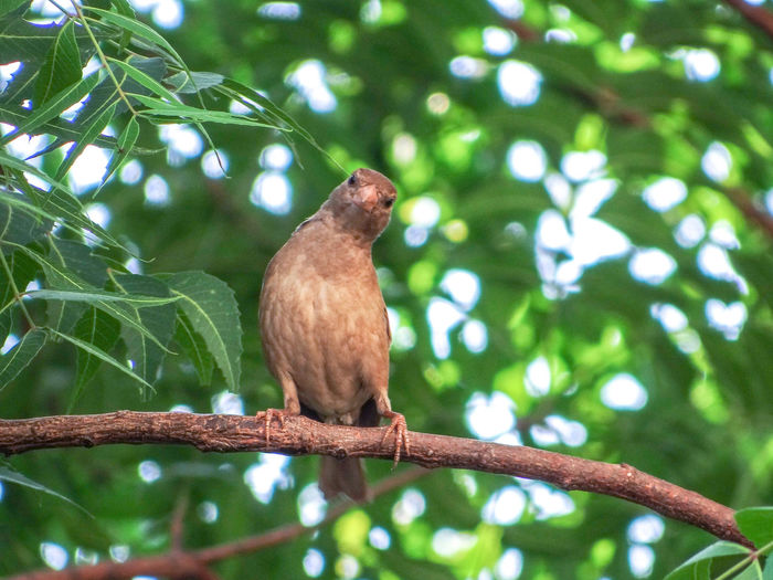 THE FEMALE SPARROW Female Sparrow Branch Tree Bird Perching Animal Themes Close-up Branch Tropical Rainforest Woods Tree Canopy  Flower Tree Tropical Bird Tree Trunk