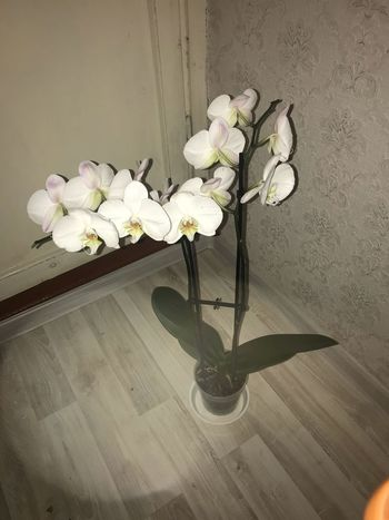 Made With IPhone 7 Flashlight No Effects Flowering Plant Flower Fragility Plant Vulnerability  Freshness Nature Vase Beauty In Nature Petal No People Indoors  Wall - Building Feature Flower Head Inflorescence Orchid White Color Decoration Close-up Growth
