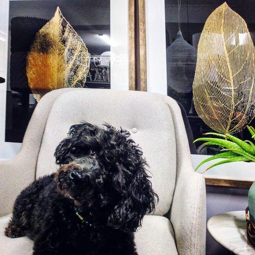 Pet Portraits Dog Indoors  Window No People Pets Day Sitting Animal Themes Close-up Mammal Beatofmyheart