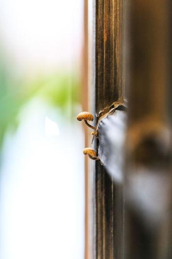 Close-up of rusty metal on window