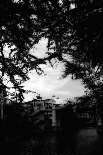 Tree Water City