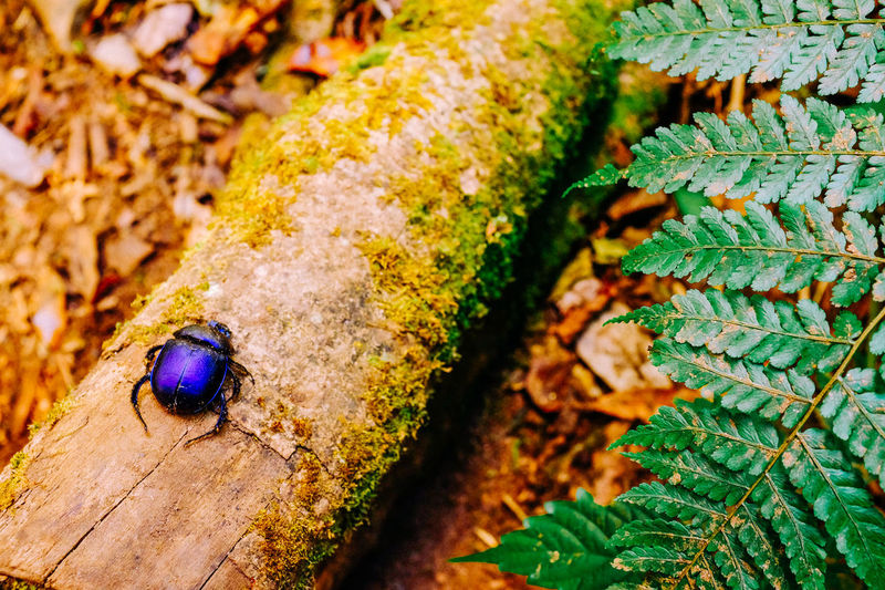 Animal Animal Themes Animal Wildlife Animals In The Wild One Animal Close-up Insect No People Green Color Leaf Plant Day Tree High Angle View Nature Beetle Tropical Forest Thailand Chiangmai