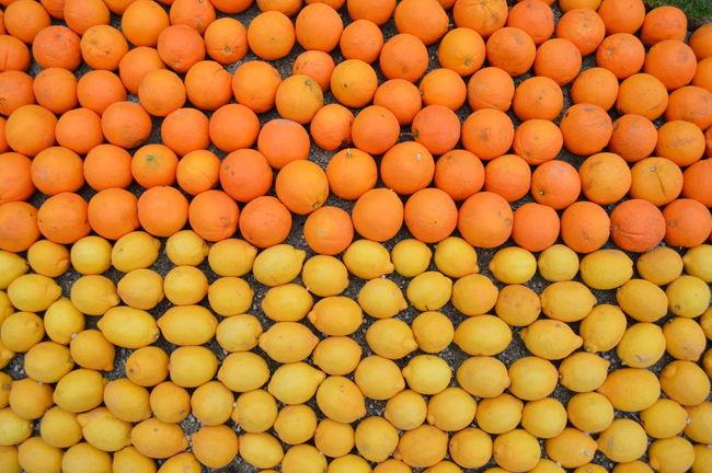 Menton Freshness Orange Lemon