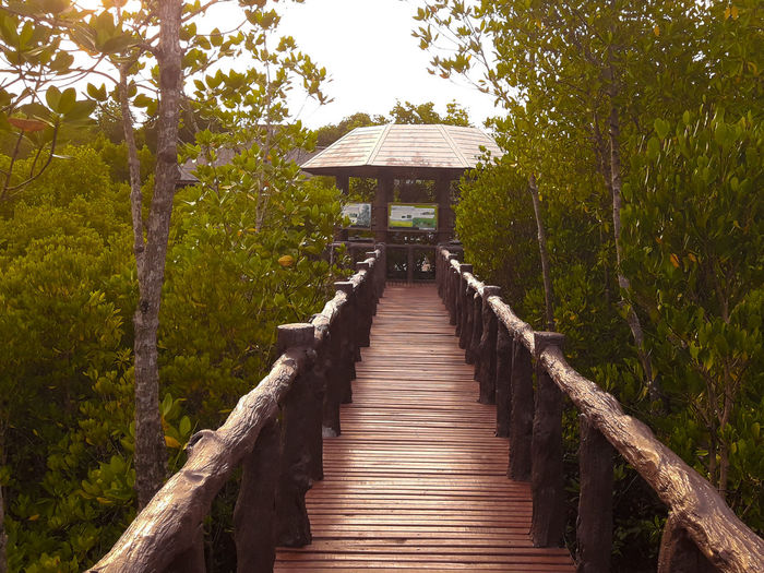 Sea of Chumphon Islands Architecture Beauty In Nature Boardwalk Built Structure Day Direction Footpath Forest Green Color Growth Land Nature No People Outdoors Plant Railing The Way Forward Tranquility Tree Wood - Material
