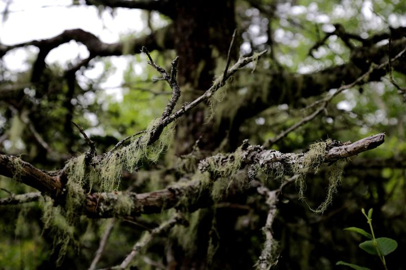 Kejimkujik National Park, Nova Scotia - branches First Eyeem Photo