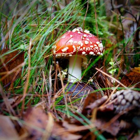 Mushroom Fungus Toadstool Day Nature Close-up No People Outdoors Beauty In Nature Autumn🍁🍁🍁 Beauty In Nature Red Poisonous Colourful Autumn Colors Forest
