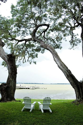 Absence Beauty In Nature Branch Chair Day Grass Green Color Growth Mount Dora, Florida Nature No People Outdoors Scenics Sky Tranquil Scene Tranquility Tree Tree Trunk Two White Chairs Under Two Trees Facing The Water Water