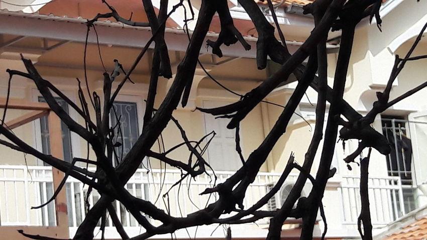 Remain of dead trees of neighborhood