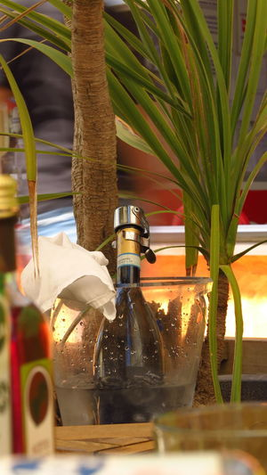 Bottle Container Plant Food And Drink Table Glass - Material No People Refreshment Nature Transparent Selective Focus Close-up Drink Freshness Olive Oil Indoors  Water Leaf Still Life Alcohol Alcoholic Drink Alcohol Bottles Wine Palm Tree Palm Leaf