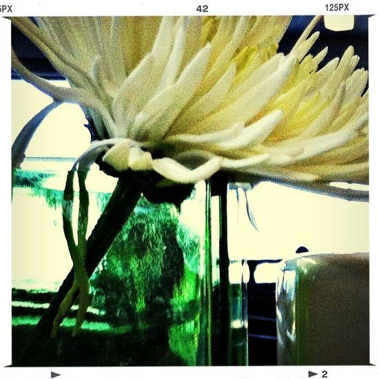 A flower just for you Enjoying Life Flower Porn Hello World Lovelovelove