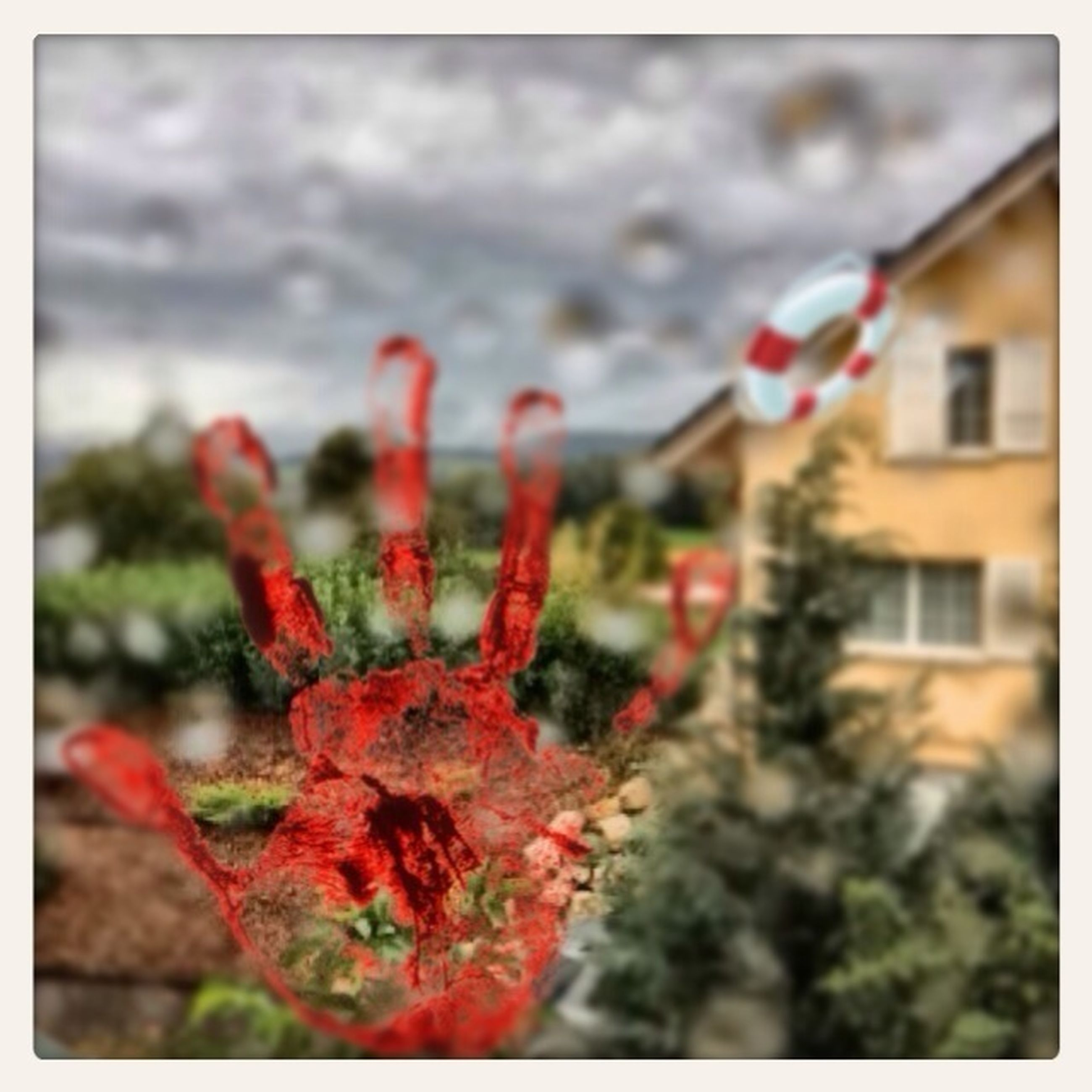 transfer print, focus on foreground, red, close-up, auto post production filter, flower, water, selective focus, growth, plant, fragility, freshness, nature, beauty in nature, outdoors, day, no people, season, drop, building exterior