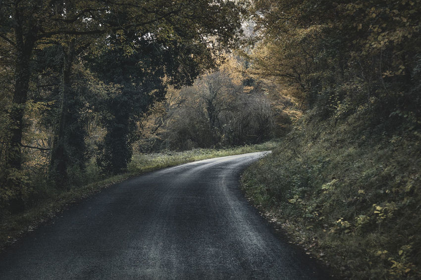 Tree Plant Direction Road The Way Forward Transportation No People Tranquility Beauty In Nature Nature Growth Diminishing Perspective Forest Day Land Empty Road Non-urban Scene Tranquil Scene Outdoors vanishing point Long