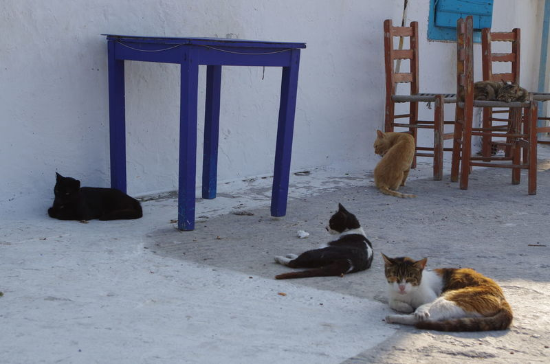 GREECE ♥♥ Griechenland Griechische Inseln Amorgos Amorgosisland Animal Themes Architecture Built Structure Cats Day Domestic Animals Domestic Cat Feline Greece Indoors  Mammal No People One Animal Pets