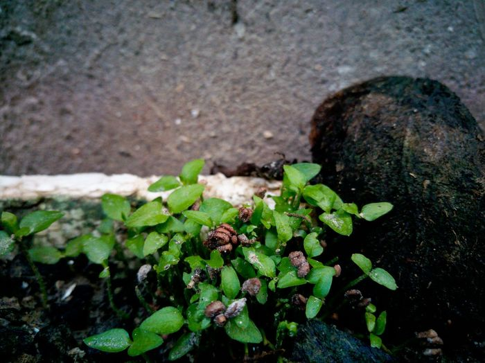 Leaf Growth Nature Green Color Plant Close-up My Year My View Like A Baby Learning To Grow