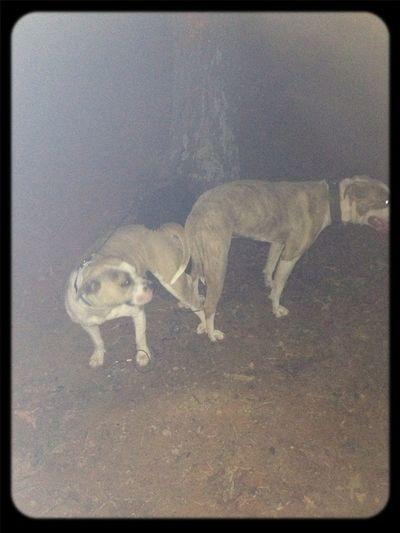 Puppies On Dha Way