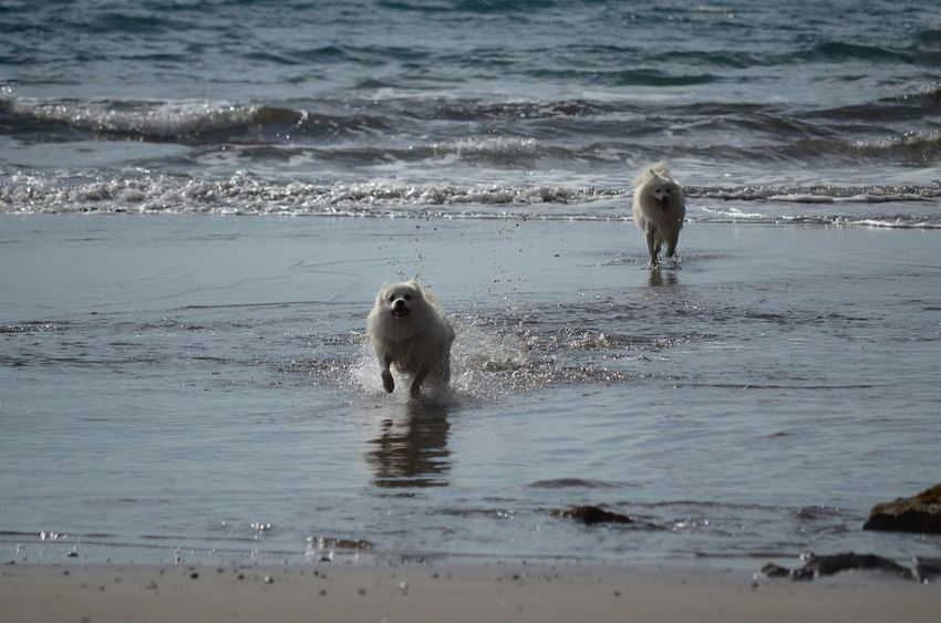 Beachphotography Dogoftheday Beautiful Animals  Doginthewater Dogs Of EyeEm Sea_collection Beach_Collection Dog Lovers Beach_world Beach Time
