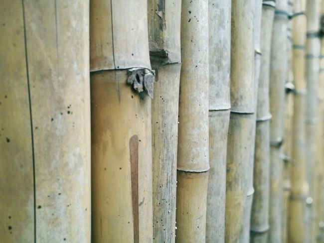 Close-up Outdoors No People Full Frame Wood - Material Bamboo Bamboo Fence Bamboo - Material