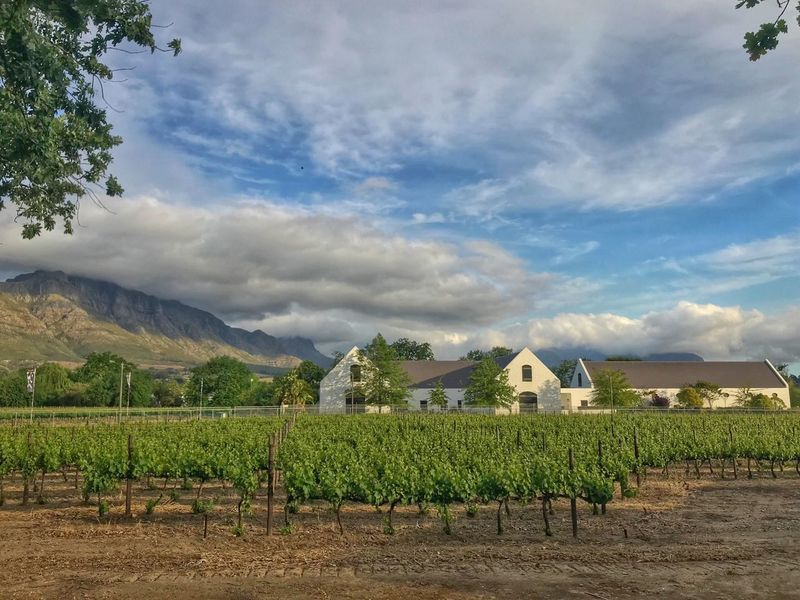 Agriculture Farm Field Sky Cloud - Sky Crop  Growth Rural Scene No People Outdoors Vineyard Landscape Day Nature Tranquility Scenics Mountain Architecture Built Structure Museum South Africa Winelands Farm Wine Farm