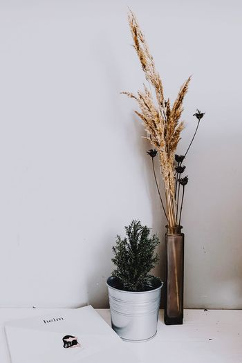 Plant Nature Indoors  Potted Plant Table No People Wall - Building Feature Vase Growth Flower Still Life Flowering Plant Decoration Copy Space Dry Beauty In Nature Close-up Day Tree Houseplant